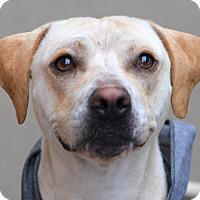 Adopt A Pet :: Nugget - Harrisville, RI