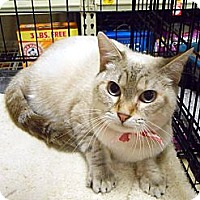 Adopt A Pet :: Buttermilk - College Station, TX