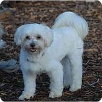 Adopt A Pet :: Beau - Ft. Myers, FL