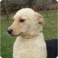 Adopt A Pet :: PENDINGBlondie - Toronto/Etobicoke/GTA, ON
