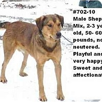 Adopt A Pet :: # 702-10 @ Animal Shelter - Zanesville, OH