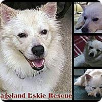 Adopt A Pet :: Griggs - Elmhurst, IL