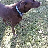 Adopt A Pet :: Lex & Tyler - Morgantown, WV