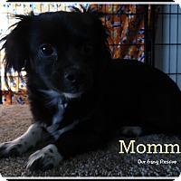 Adopt A Pet :: Polly - Cincinnati, OH
