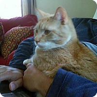 Adopt A Pet :: Wendy - Bedford, MA