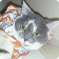 Adopt A Pet :: Gracia - Hamburg, NY