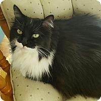 Adopt A Pet :: Tess - Laguna Woods, CA