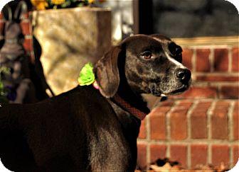 Terrier (Unknown Type, Medium)/Australian Cattle Dog Mix Dog for adoption in Woodstock, Georgia - Lexie