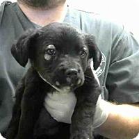 Adopt A Pet :: FOXY - Conroe, TX