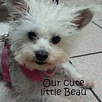 Terrier (Unknown Type, Medium) Mix Dog for adoption in Midway City, California - Beau