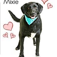 Adopt A Pet :: Mixie - Troy, VA