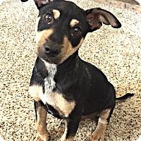 Adopt A Pet :: Ernie - Boulder, CO