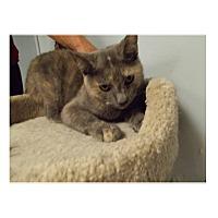 Adopt A Pet :: Lara - Floral City, FL