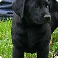 Adopt A Pet :: Madison cutie - Sacramento, CA