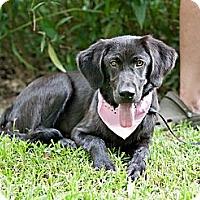 Adopt A Pet :: Bella-w/video! - East Hartford, CT