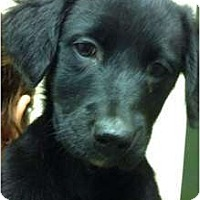 Adopt A Pet :: Misti - Hagerstown, MD