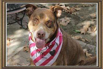 Doberman Pinscher Mix Dog for adoption in Pasadena, California - GINGER