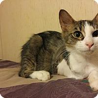Adopt A Pet :: Smoochie - McDonough, GA