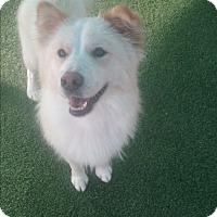 Adopt A Pet :: Chloe and Sasha - Sacramento, CA