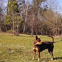 Adopt A Pet :: Sassy - Jefferson, TX