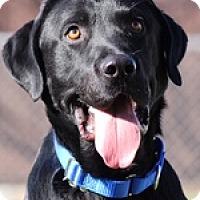 Adopt A Pet :: Jorden - Torrance, CA