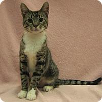 Adopt A Pet :: Nikki - Redwood Falls, MN