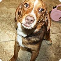 Adopt A Pet :: Dale - Sparta, NJ
