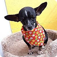 Adopt A Pet :: Taquito - Oakland, CA