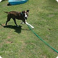 Adopt A Pet :: BRIELEE - KELLYVILLE, OK