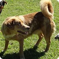 Adopt A Pet :: Red meet me 6/2 - Manchester, CT