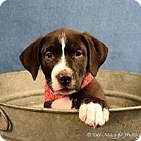 Adopt A Pet :: Pumba - Lapeer, MI