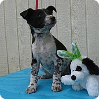 Adopt A Pet :: Paisley - Humboldt, TN