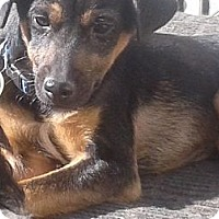 Adopt A Pet :: Snipes- IN CT - West Hartford, CT