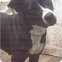 Adopt A Pet :: Keyla - Forest Hills, NY