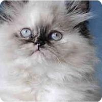 Adopt A Pet :: Mischa - Columbus, OH