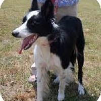 Adopt A Pet :: Fern - Conway, AR