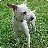 Adopt A Pet :: Casper - Kingwood, TX