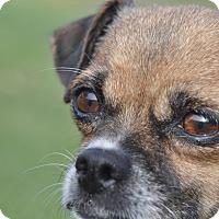 Adopt A Pet :: Erica - Tumwater, WA