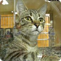 Adopt A Pet :: Eric - Covington, KY