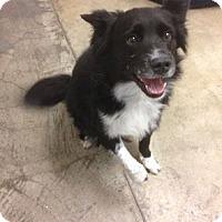 Adopt A Pet :: CeCe - Nampa, ID
