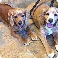 Adopt A Pet :: Benji and Lucky - Sacramento, CA