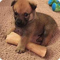Adopt A Pet :: Griffin - Alpharetta, GA