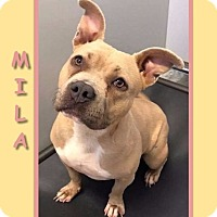 Adopt A Pet :: MILA - Dallas, NC