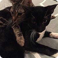 Adopt A Pet :: Macy - Tampa, FL