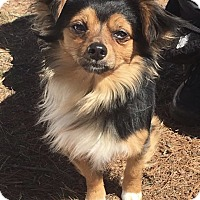 Adopt A Pet :: Mario - Port Jervis, NY