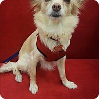 Adopt A Pet :: Delilah - Valencia, CA