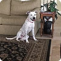 Adopt A Pet :: Marlow - Tampa, FL
