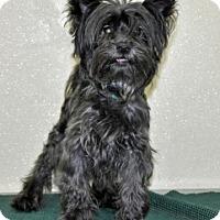 Adopt A Pet :: Radar - Port Washington, NY