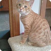 Adopt A Pet :: Colby - Grand Rapids, MI