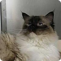 Adopt A Pet :: BooBoo - Lunenburg, MA